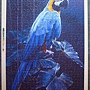 blue macow.JPG