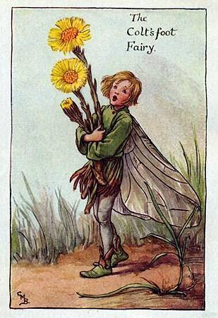 coltsfoot-flower-fairy.jpg