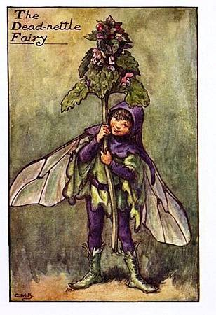 dead-nettle-flower-fairy.jpg