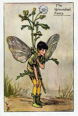 groundsel-flower-fairy.jpg