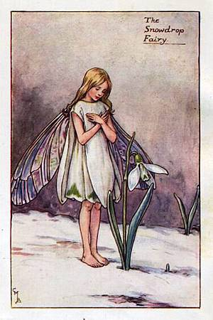snowdrop-flower-fairy.jpg