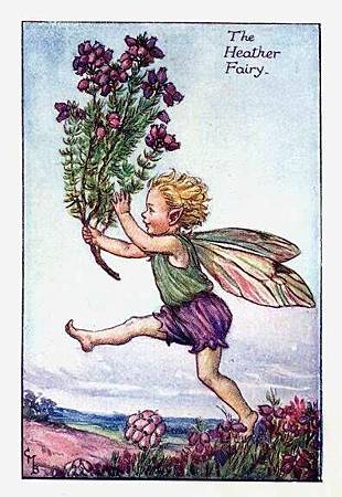 heather-flower-fairy.jpg