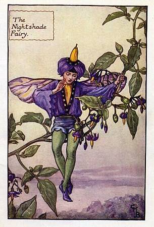 nightshade-flower-fairy.jpg