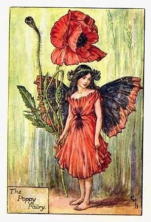poppy-flower-fairy.jpg
