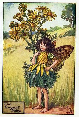 ragwort-flower-fairy.jpg