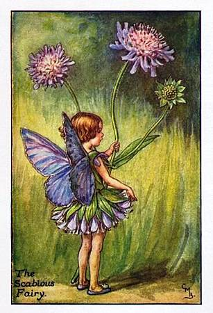 scabious-flower-fairy.jpg