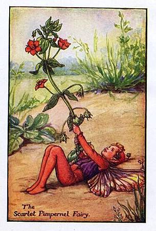 scarlet-pimpernel-flower-fairy.jpg