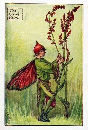 sorrel-flower-fairy.jpg