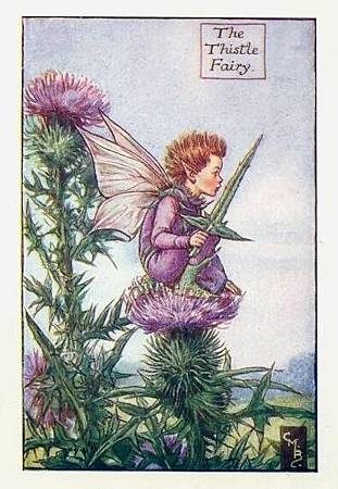 thistle-flower-fairy.jpg