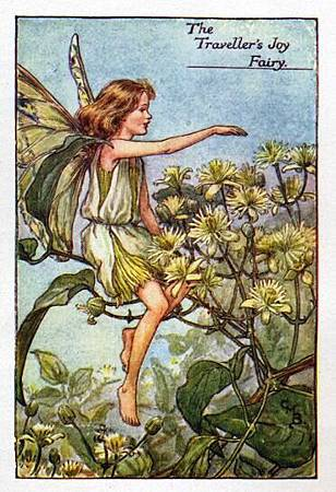 travellers-joy-flower-fairy.jpg