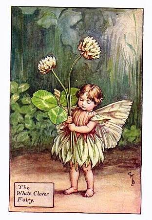white-clover-flower-fairy.jpg
