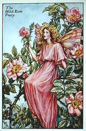 wild-rose-flower-fairy.jpg
