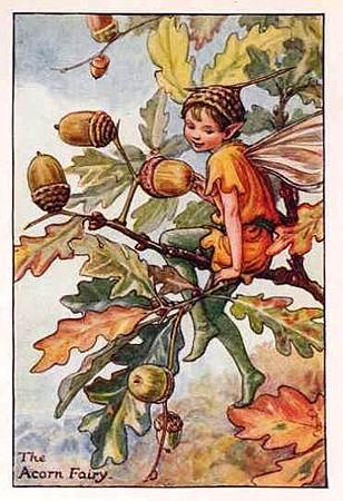 Acorn Flower Fairy.jpg