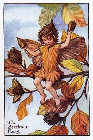 Beechnut Flower Fairy.jpg