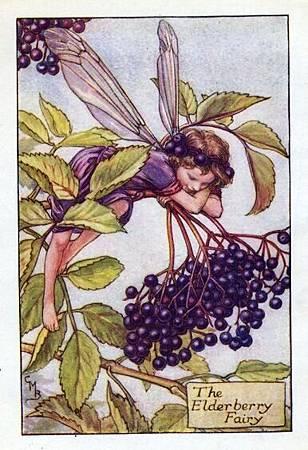 Elderberry Flower Fairy.jpg