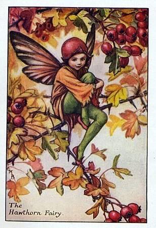Hawthorn Flower Fairy.jpg