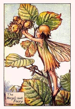 Hazelnut Flower Fairy.jpg