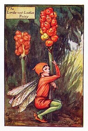 Lords-and-Ladies Autumn Flower Fairy.jpg