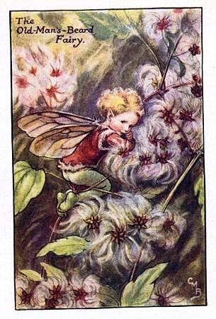 Old-Man's-Beard Flower Fairy.jpg