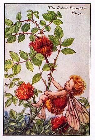 Robin's Pincushion Flower Fairy.jpg