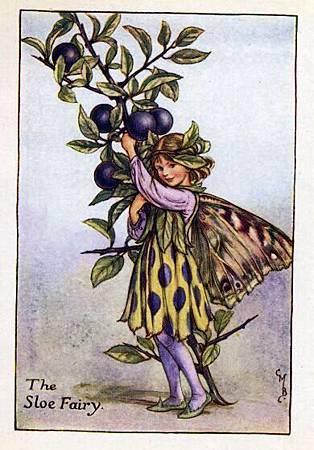 Sloe Flower Fairy Vintage.jpg