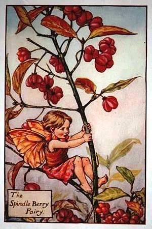 Spindle Berry Flower Fairy.jpg