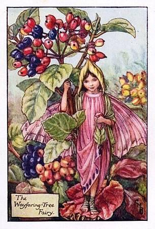 Wayfaring Tree Flower Fairy.jpg