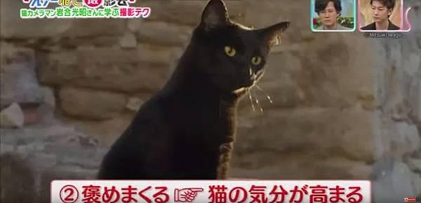岩合光昭smap-4.jpg