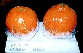 p_orange01.jpg
