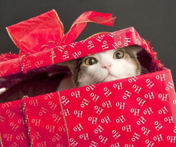 Christmas_Cat