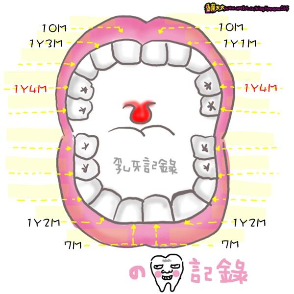 長牙第9,10顆