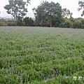 花露休閒農場