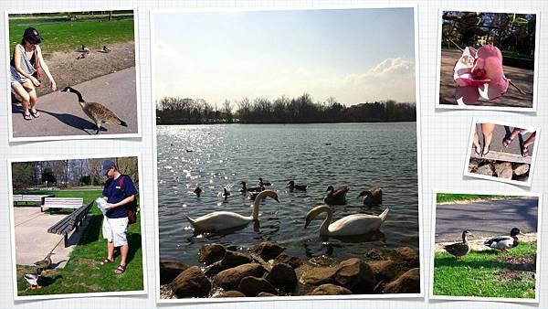 20120321-帶土司到湖邊餵鴨子!