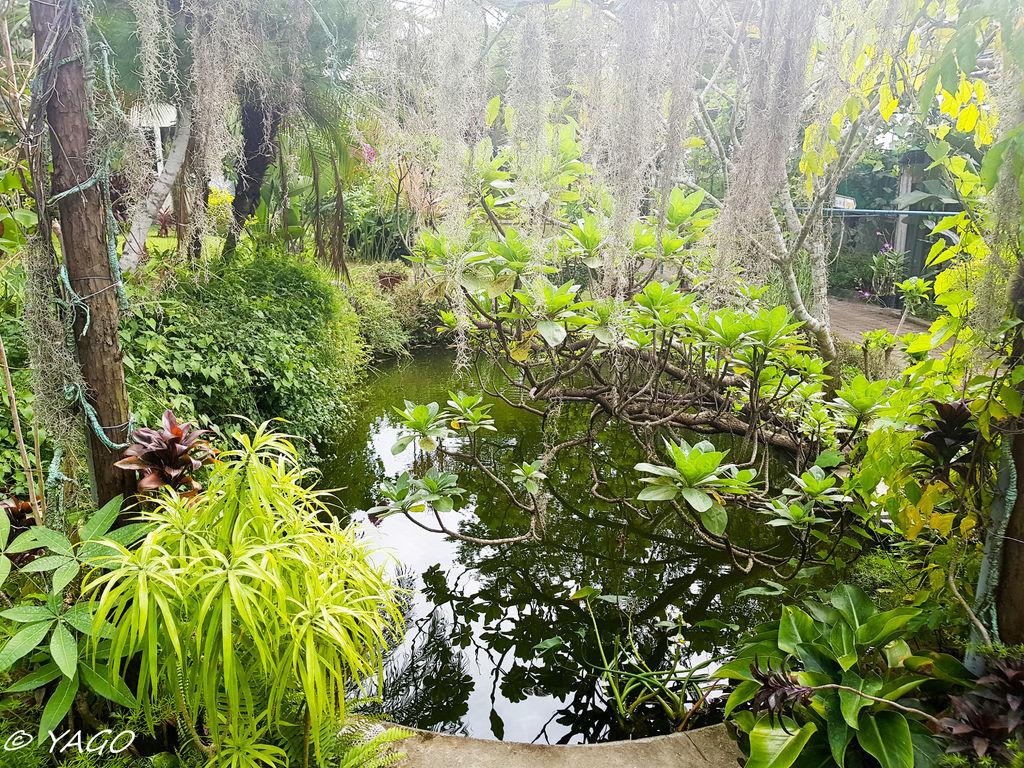 蘭科植物園 (4 - 42).jpg