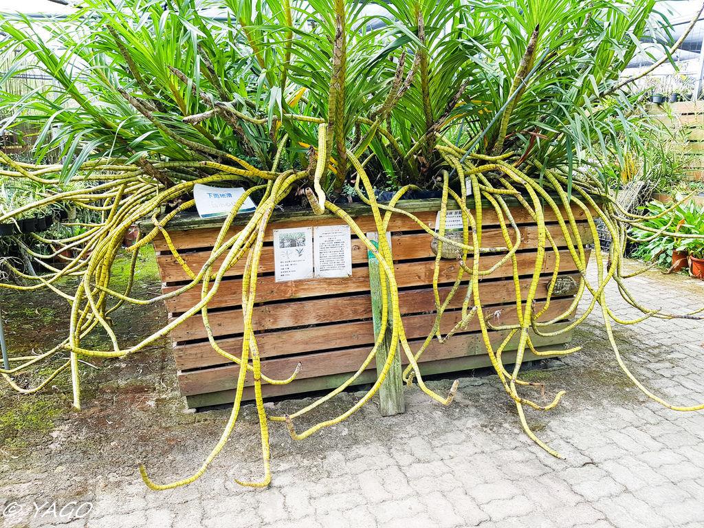 蘭科植物園 (7 - 42).jpg