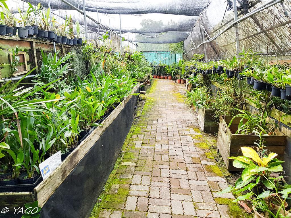 蘭科植物園 (10 - 42).jpg