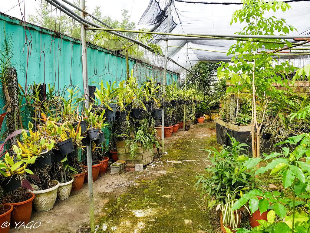 蘭科植物園 (16 - 42).jpg