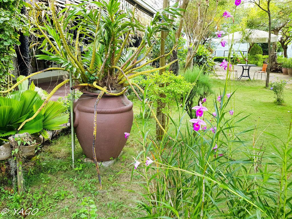 蘭科植物園 (21 - 42).jpg