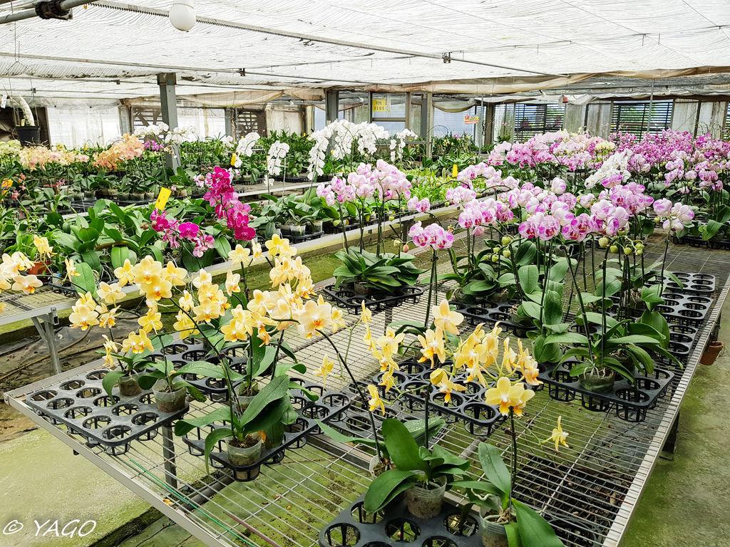 蘭科植物園 (29 - 42).jpg
