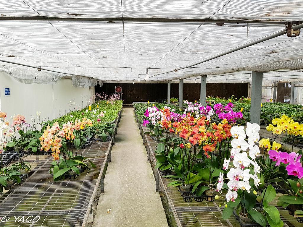 蘭科植物園 (30 - 42).jpg