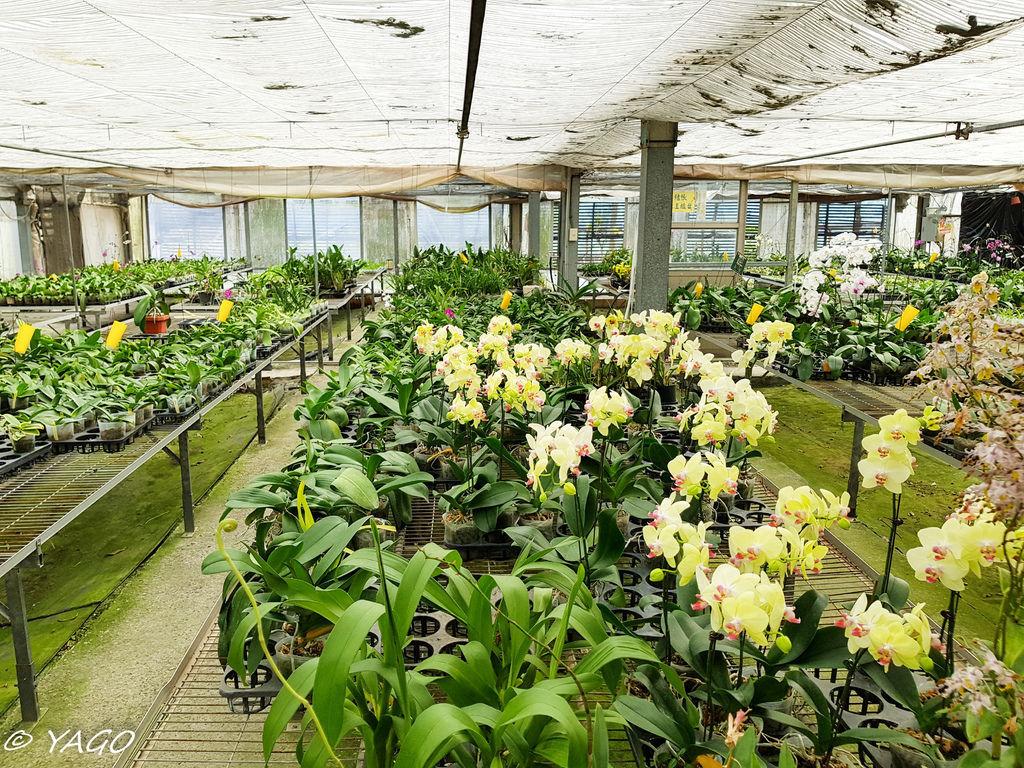 蘭科植物園 (31 - 42).jpg