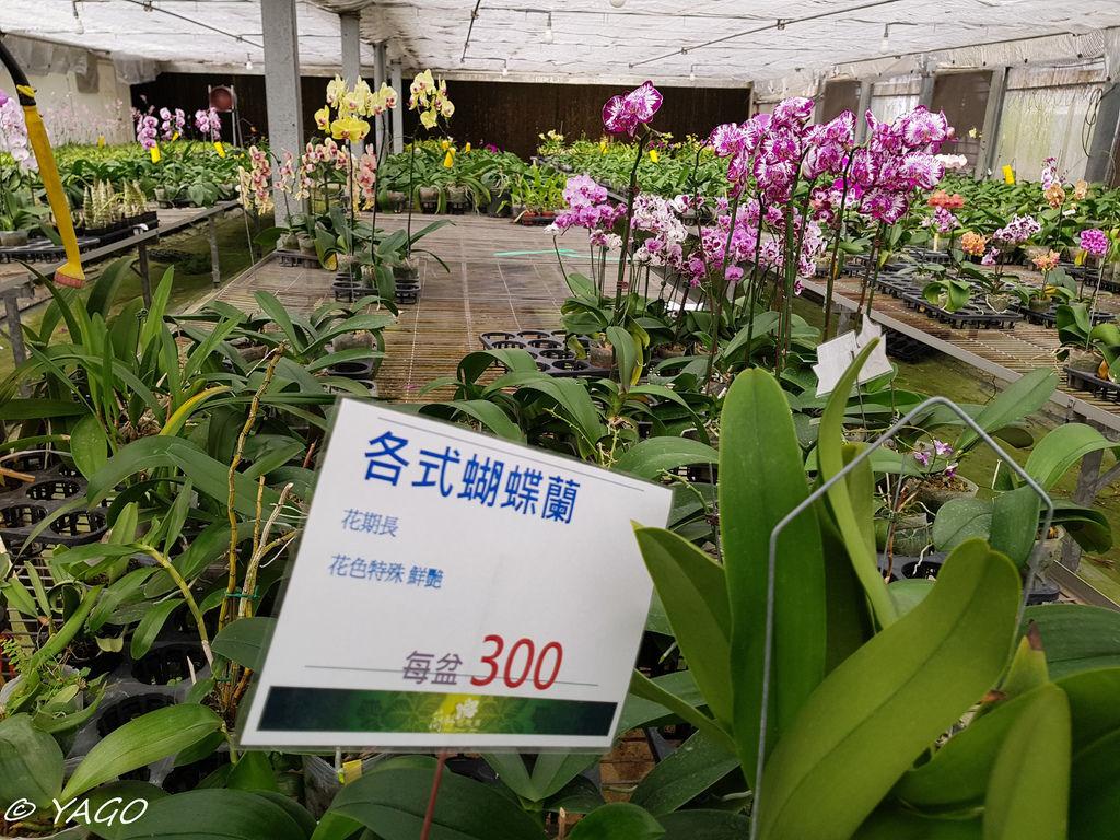 蘭科植物園 (33 - 42).jpg