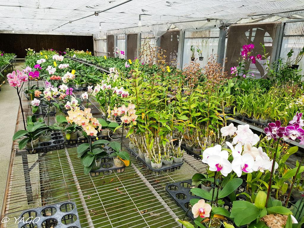 蘭科植物園 (32 - 42).jpg