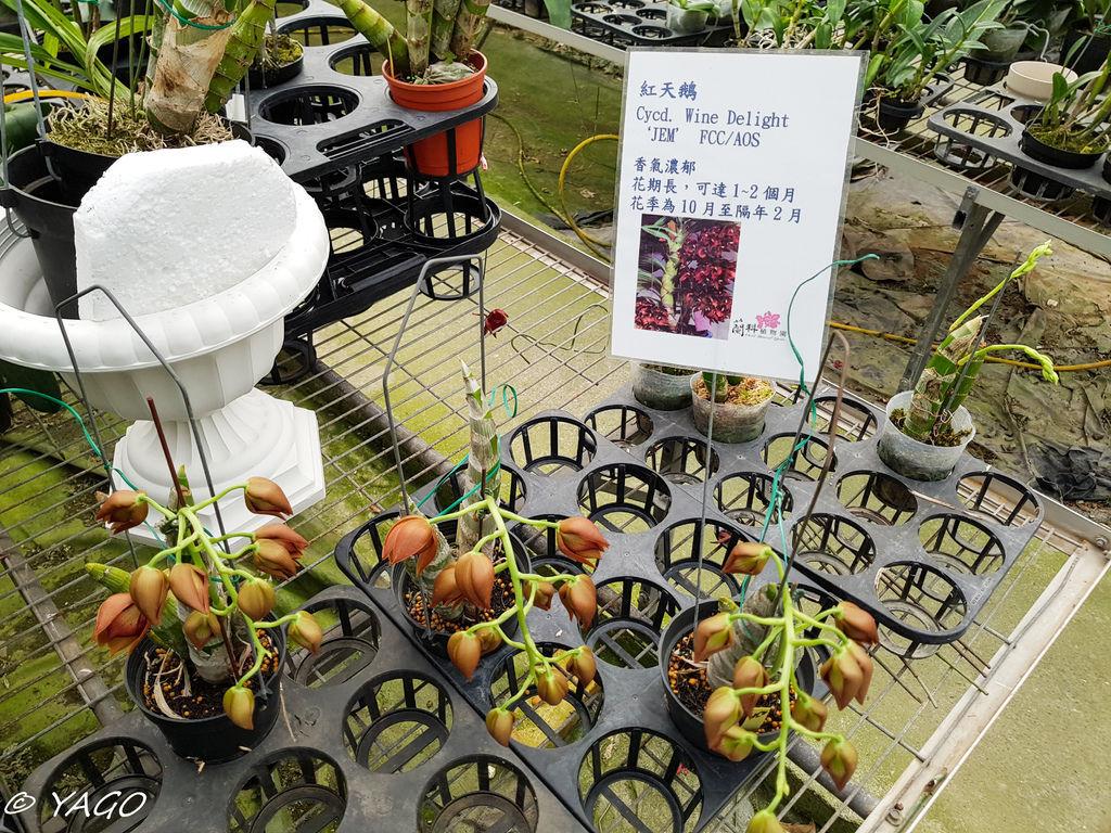 蘭科植物園 (34 - 42).jpg