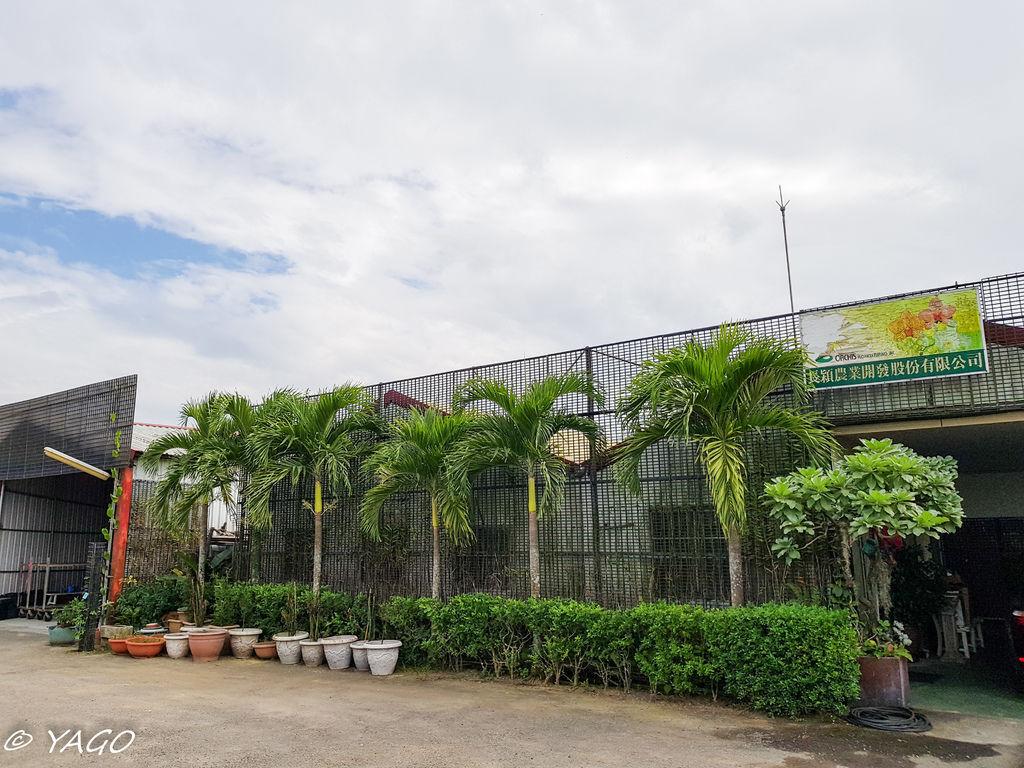 蘭科植物園 (42 - 42).jpg