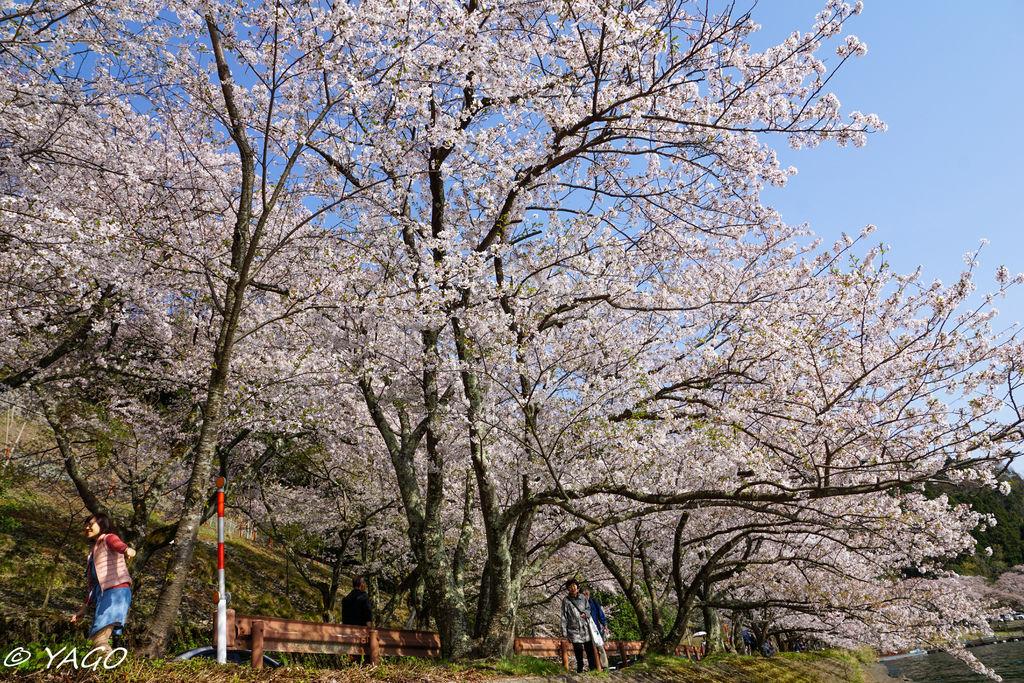 滋賀 (179 - 1096).jpg
