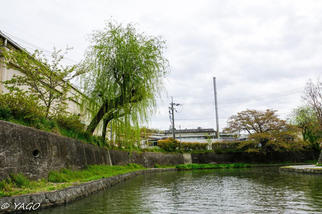 滋賀 (294 - 1096).jpg
