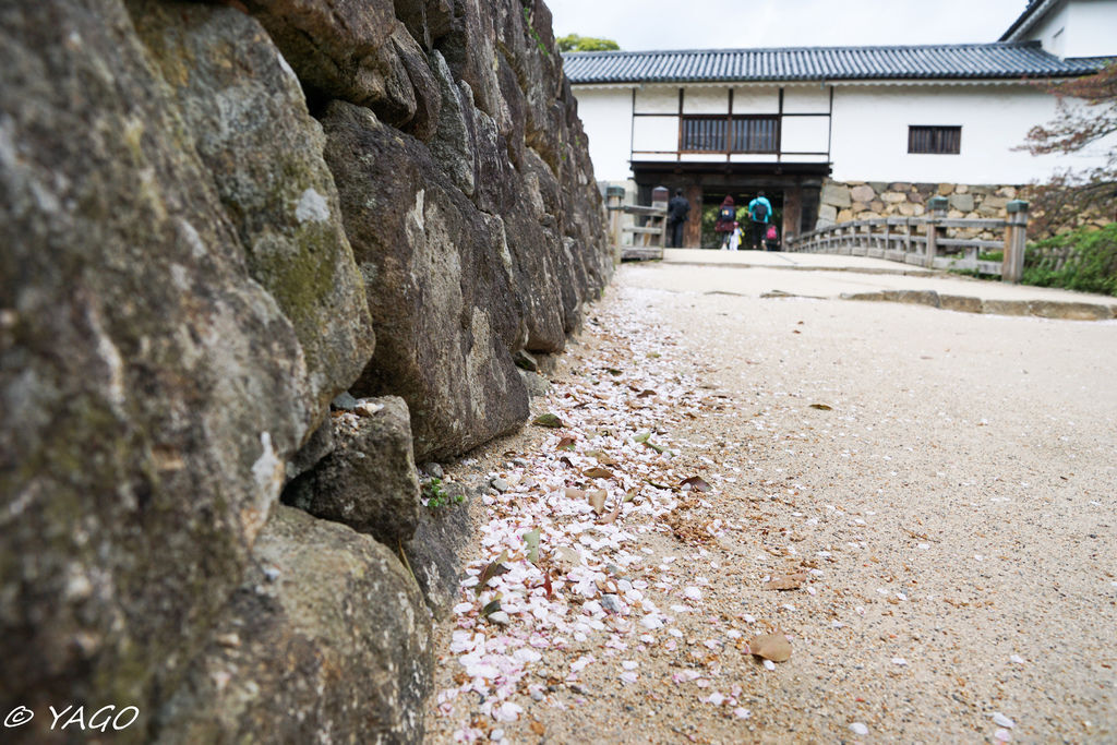 滋賀 (384 - 1096).jpg