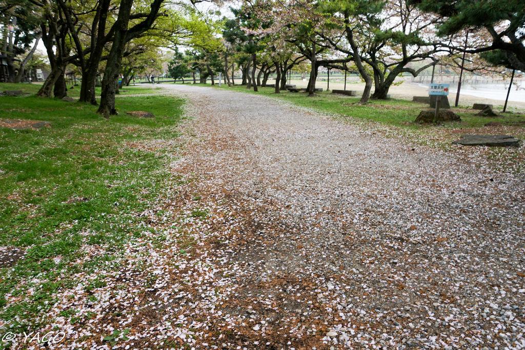 滋賀 (435 - 1096).jpg