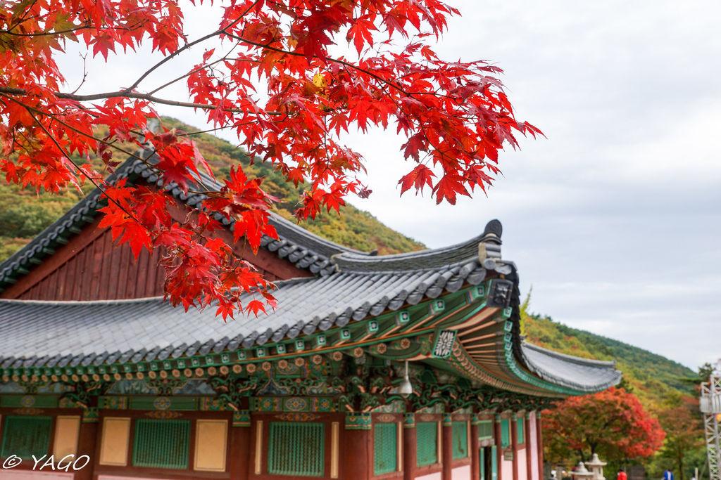 釜山 (910 - 1179).jpg